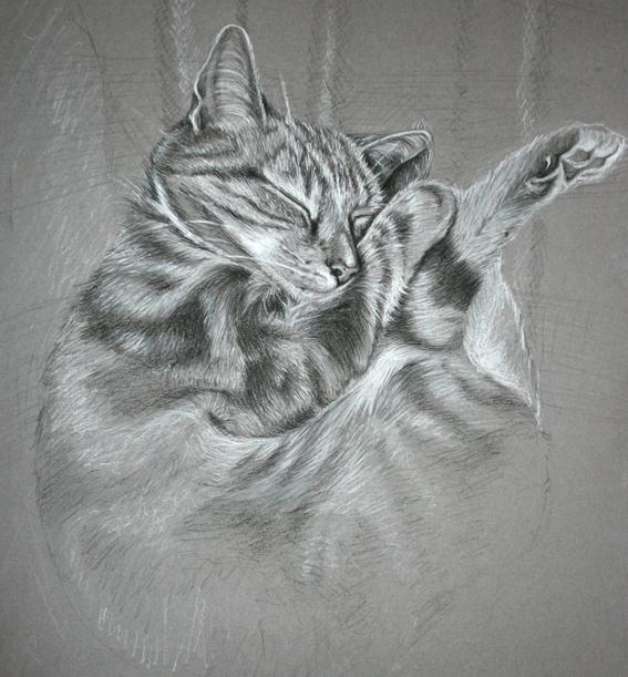 Cat Portrait 1