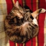 cats-portrait-photo-1