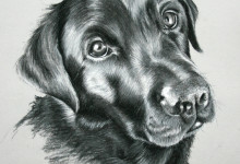 Dog Portrait 1
