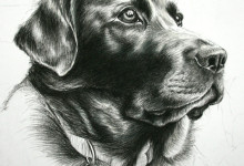 Dog Portrait 4