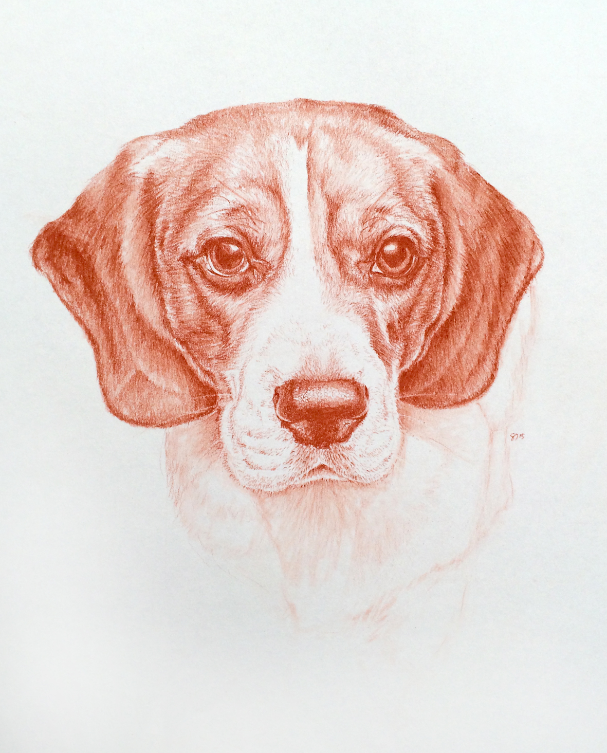 dog portrait 5