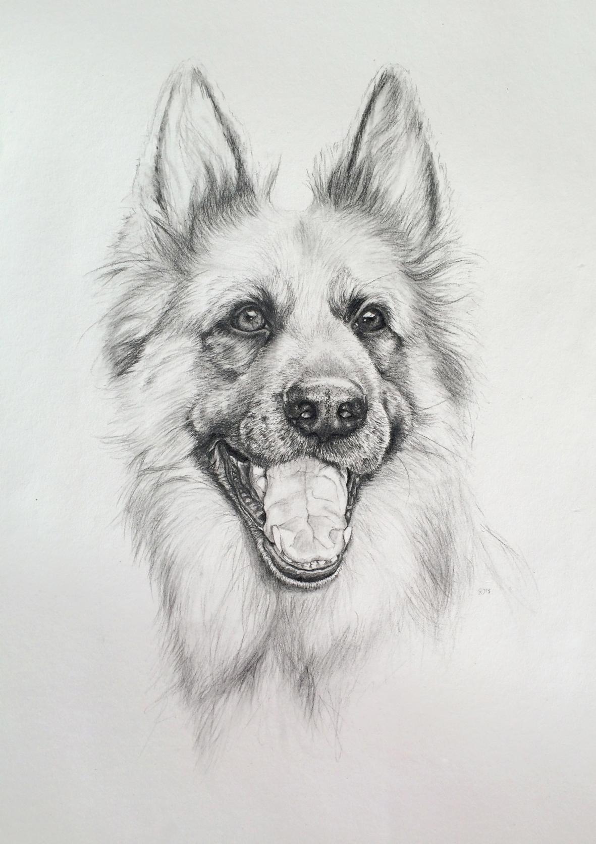 dog portrait 7